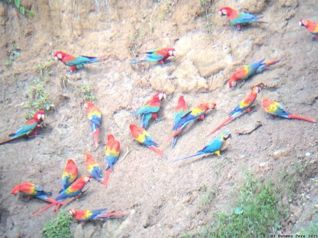 Peru2015_022