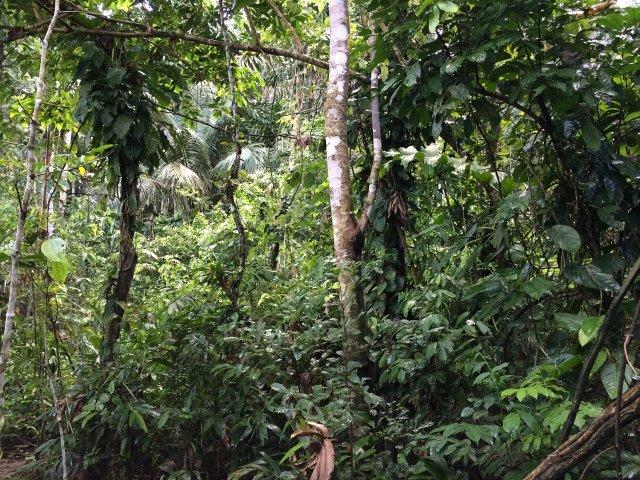TRC_foliage2