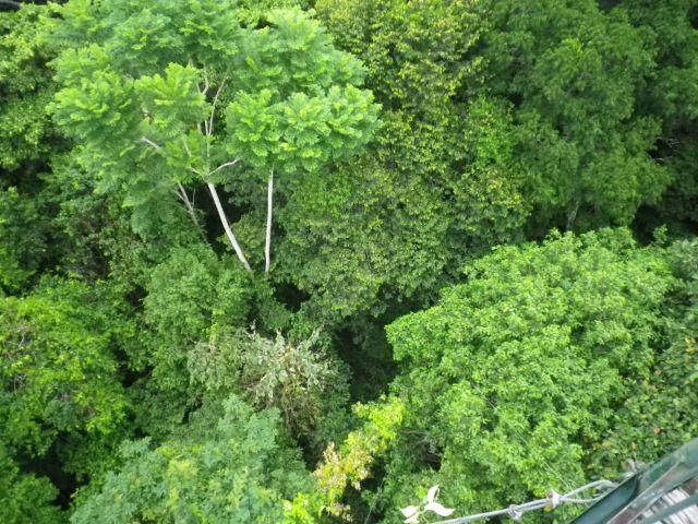 canopy3