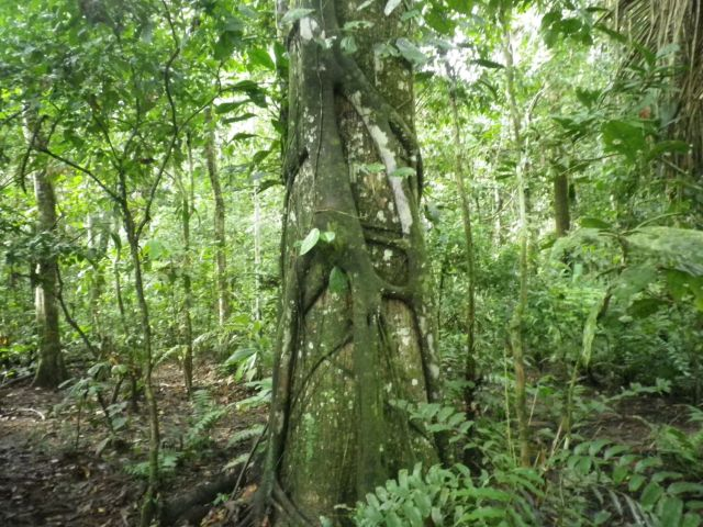 Trees&Foliage1