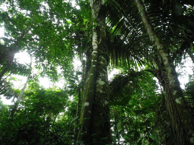 Trees&Foliage2