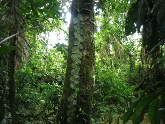 Trees&Foliage4