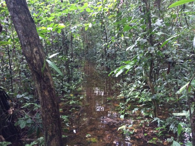 amazon-Inotawa-flooded-forest(1)