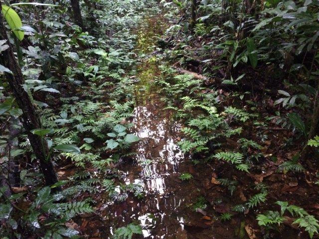 amazon-Inotawa-flooded-forest(3)