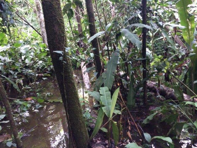 amazon-Inotawa-flooded-trail(1)