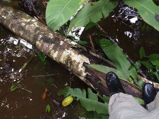 amazon-Inotawa-flooded-trail(5)