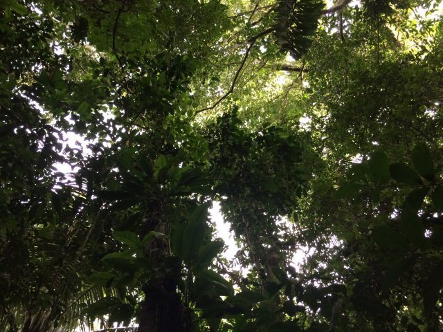 amazon-Inotawa-nature_canopy