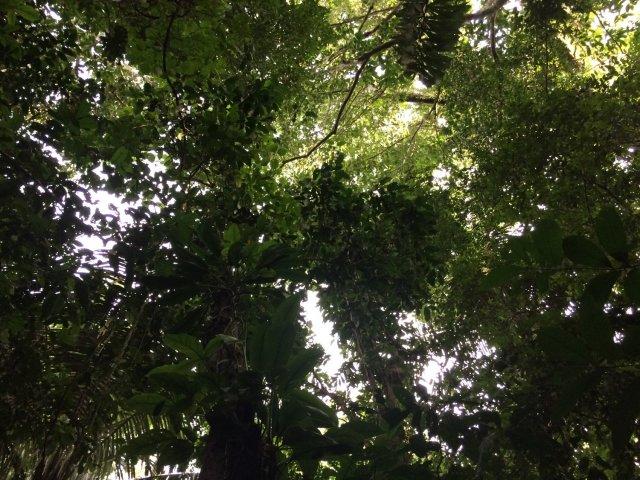 amazon-Inotawa-nature_canopy