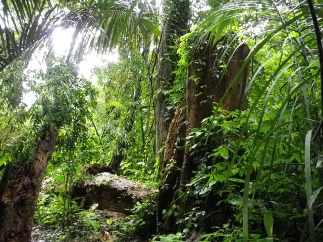 Inotawa-forest-2013-1