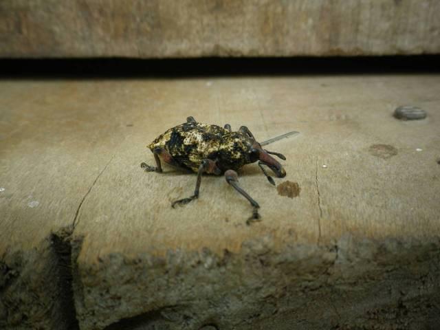 Inotawa-insect2013-3