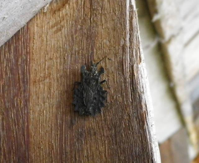 Inotawa-insect2013-4