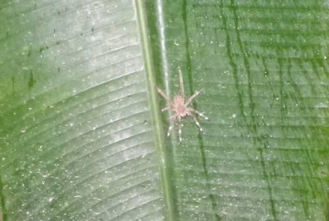 Inotawa-spider2013-1