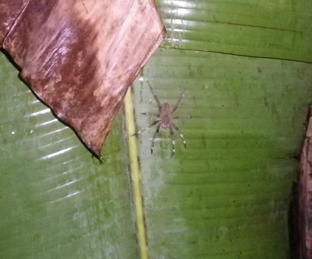 Inotawa-spider2013-5