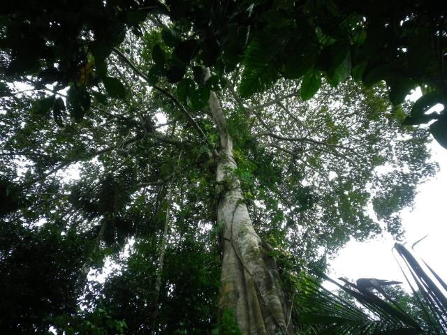 Inotawa-tree2013-2