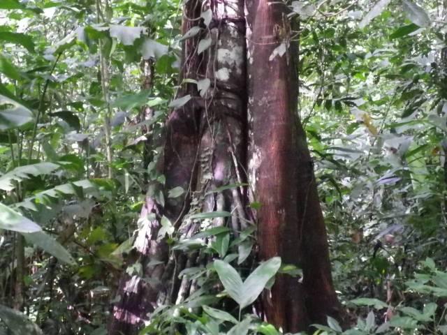 Inotawa-tree2013-3