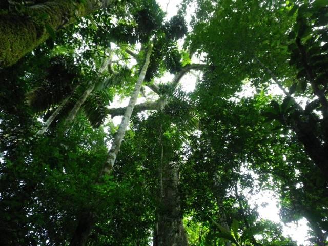 Inotawa-tree2013-5