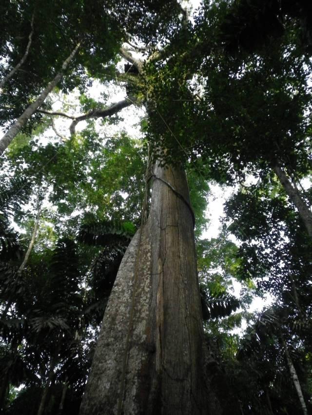 Inotawa-tree2013-7