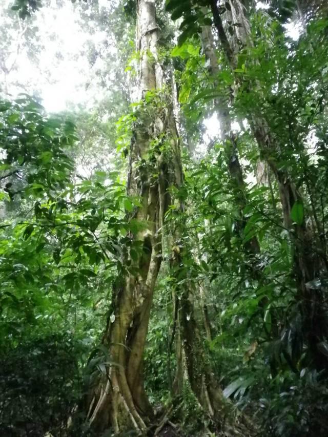 Inotawa-tree2013-8