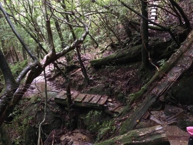 japan16-yakusugiland-cedar-steps1