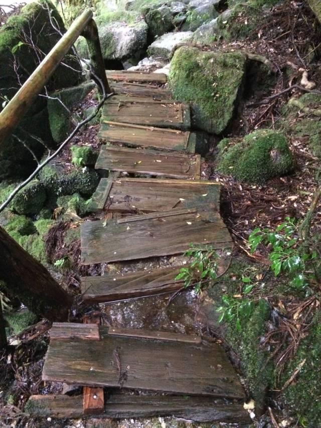 japan16-yakusugiland-cedar-steps11