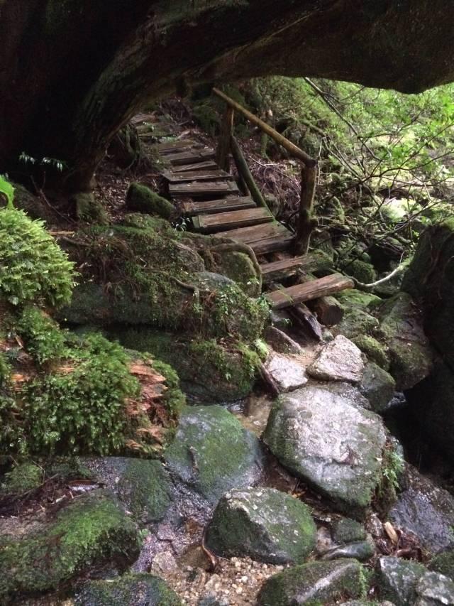 japan16-yakusugiland-cedar-steps12