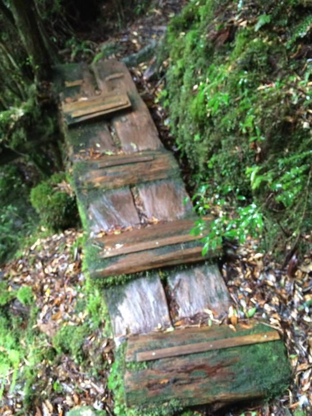 japan16-yakusugiland-cedar-steps13