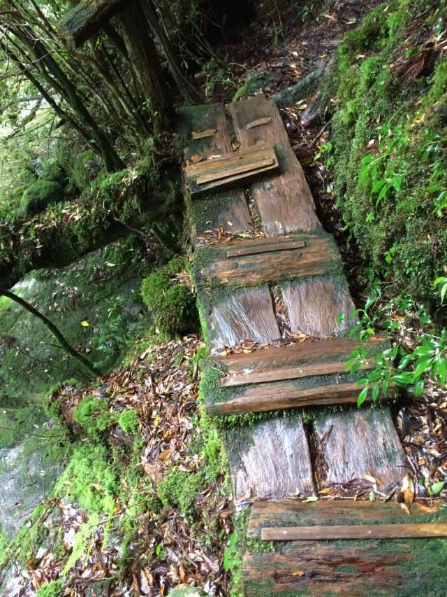 japan16-yakusugiland-cedar-steps14