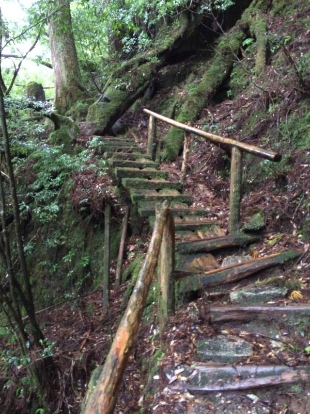 japan16-yakusugiland-cedar-steps15