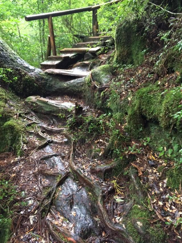 japan16-yakusugiland-cedar-steps17