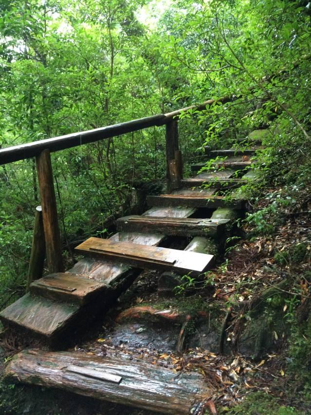 japan16-yakusugiland-cedar-steps18