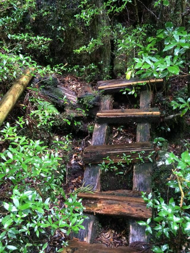 japan16-yakusugiland-cedar-steps19