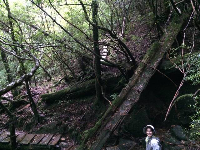 YakusugiLand steps
