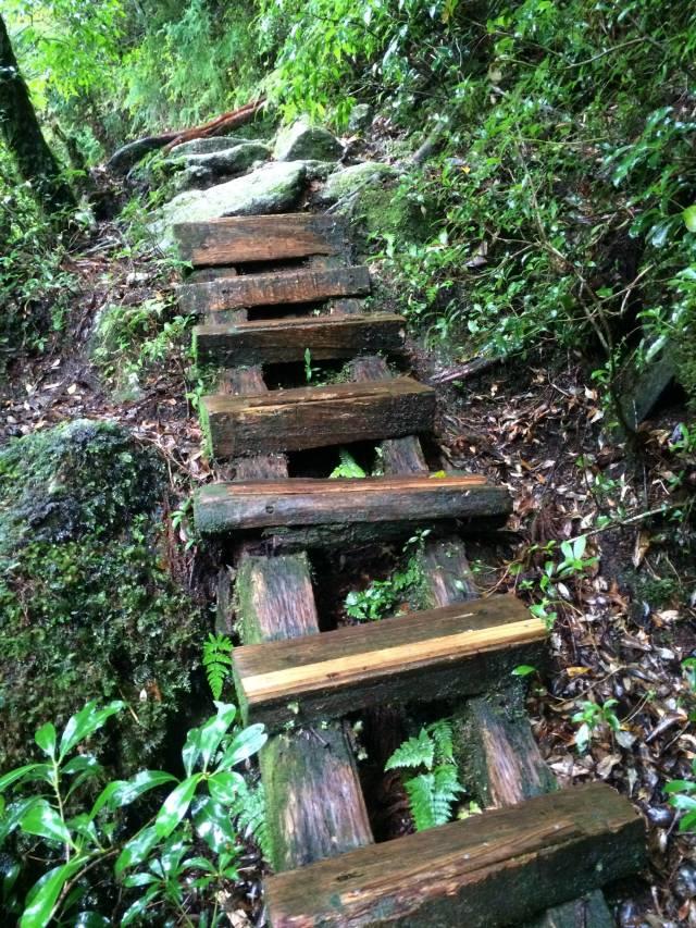 japan16-yakusugiland-cedar-steps20