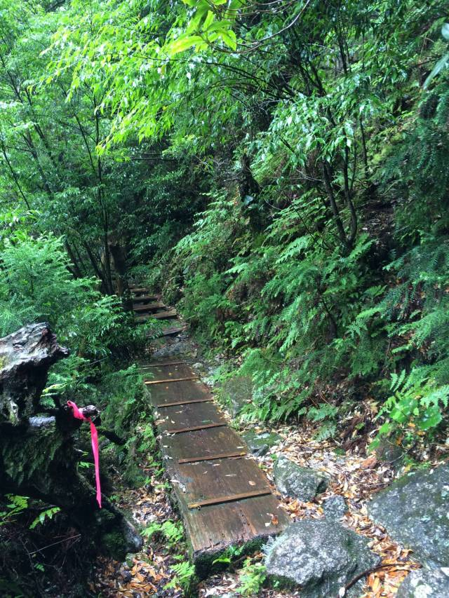 japan16-yakusugiland-cedar-steps21