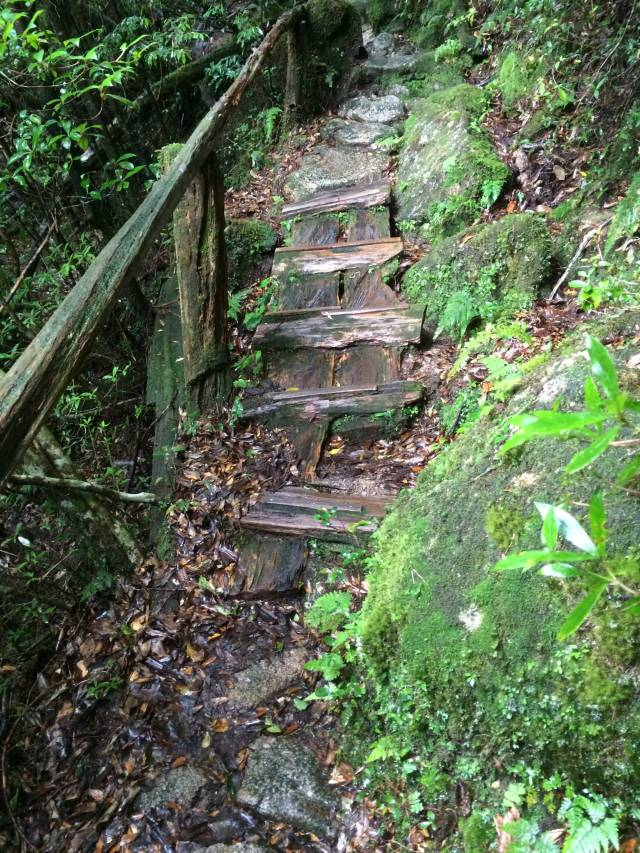 japan16-yakusugiland-cedar-steps22
