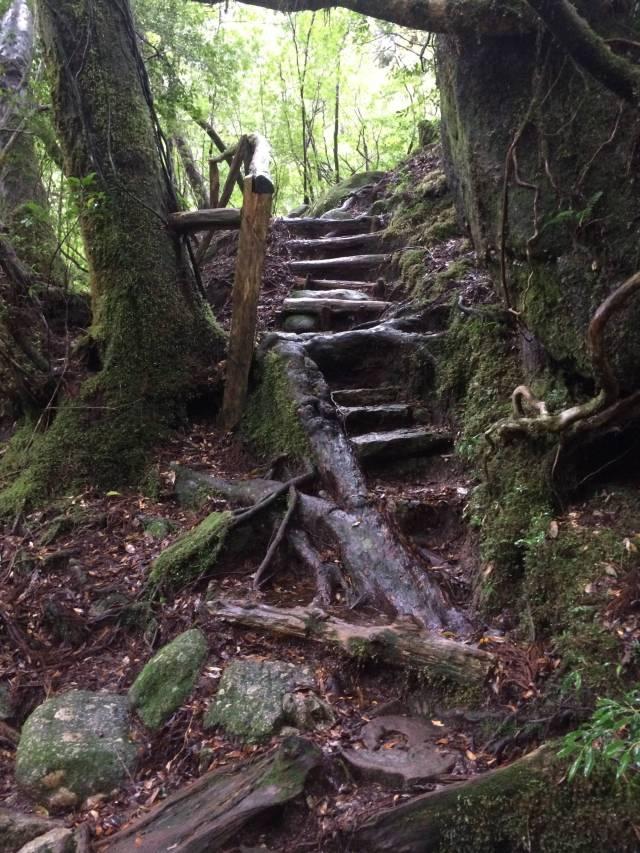 japan16-yakusugiland-cedar-steps25