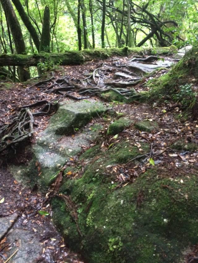 japan16-yakusugiland-cedar-steps26