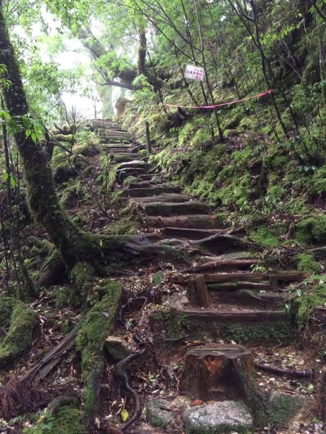 japan16-yakusugiland-cedar-steps27