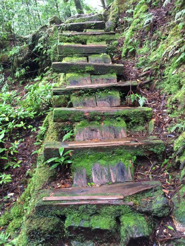 japan16-yakusugiland-cedar-steps28