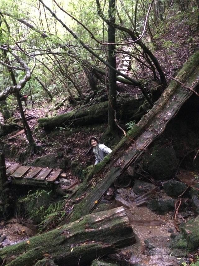 japan16-yakusugiland-cedar-steps3