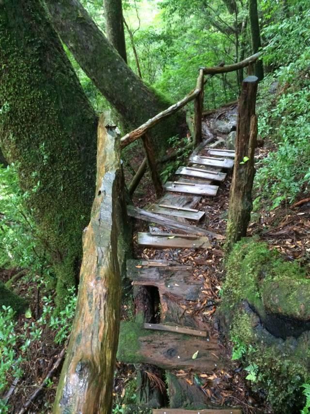 japan16-yakusugiland-cedar-steps30