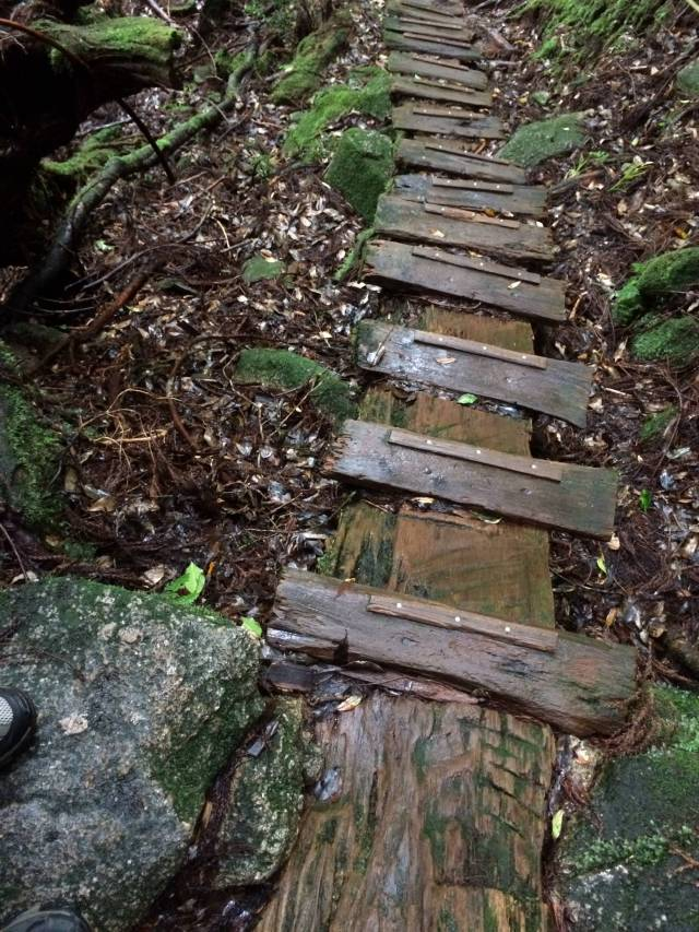 japan16-yakusugiland-cedar-steps31