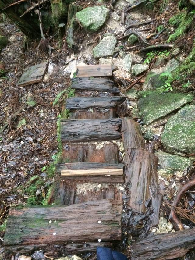 japan16-yakusugiland-cedar-steps32