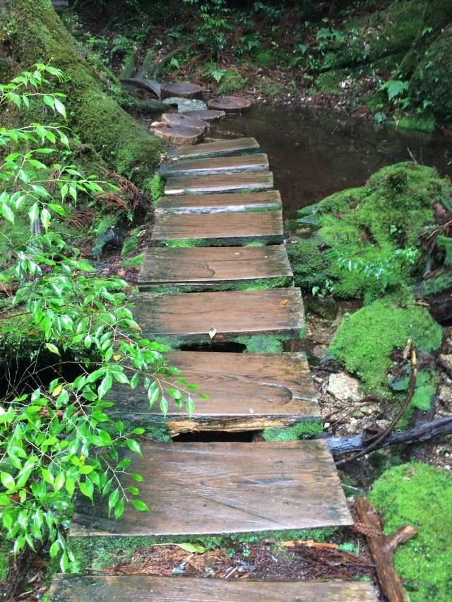 japan16-yakusugiland-cedar-steps33