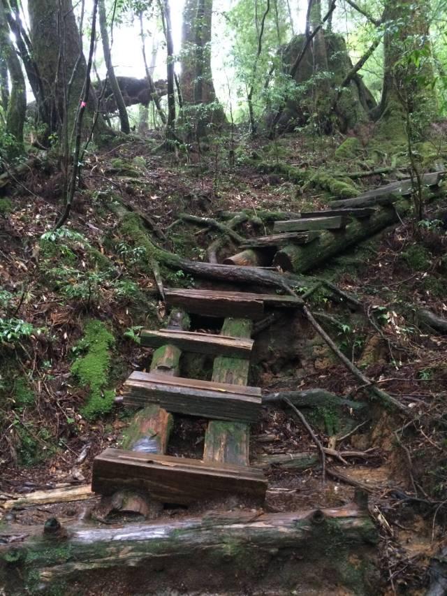 japan16-yakusugiland-cedar-steps34