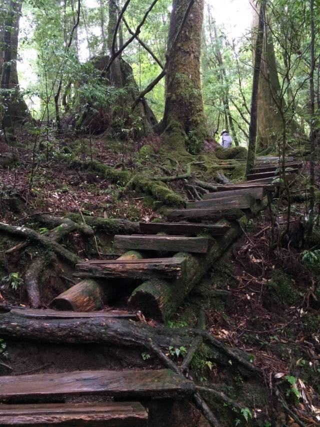 japan16-yakusugiland-cedar-steps35