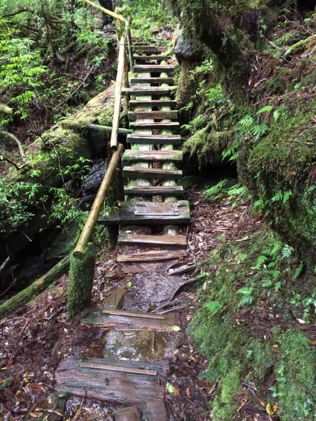 japan16-yakusugiland-cedar-steps36