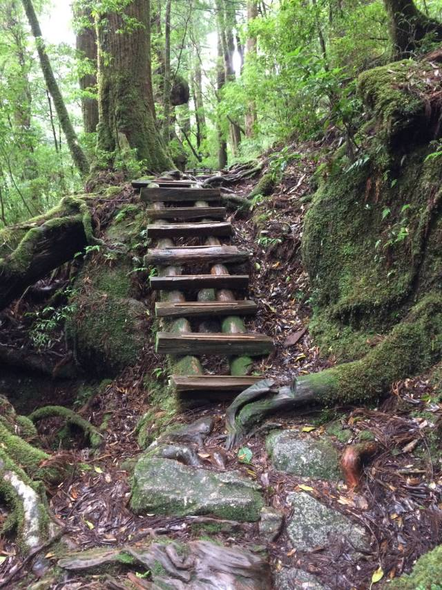 japan16-yakusugiland-cedar-steps38