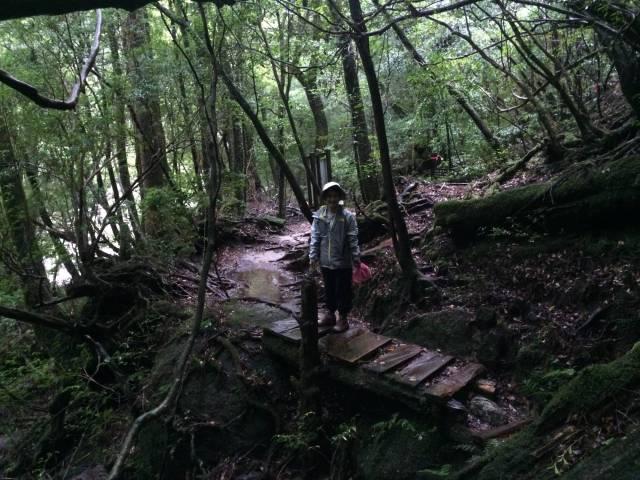 japan16-yakusugiland-cedar-steps4