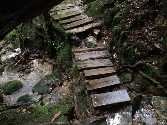 japan16-yakusugiland-cedar-steps5
